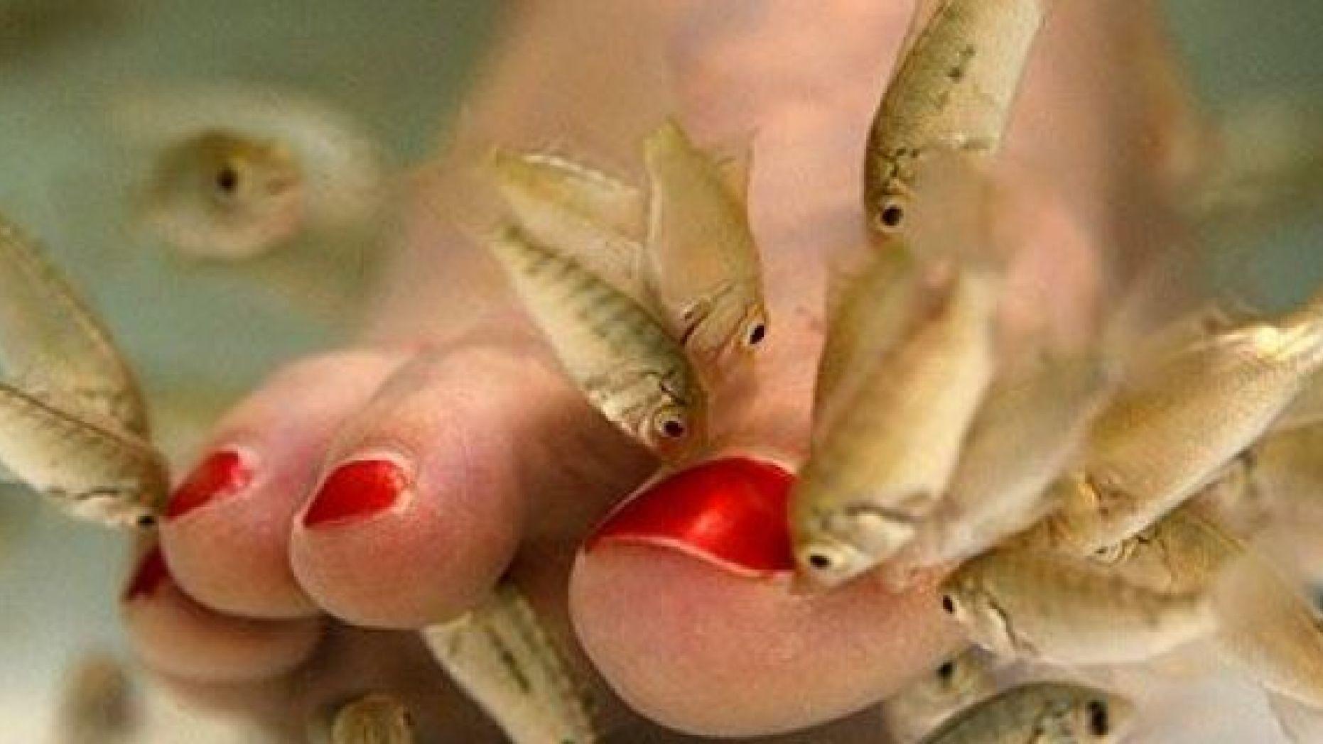 pikkelysömörrel halat kezelnek